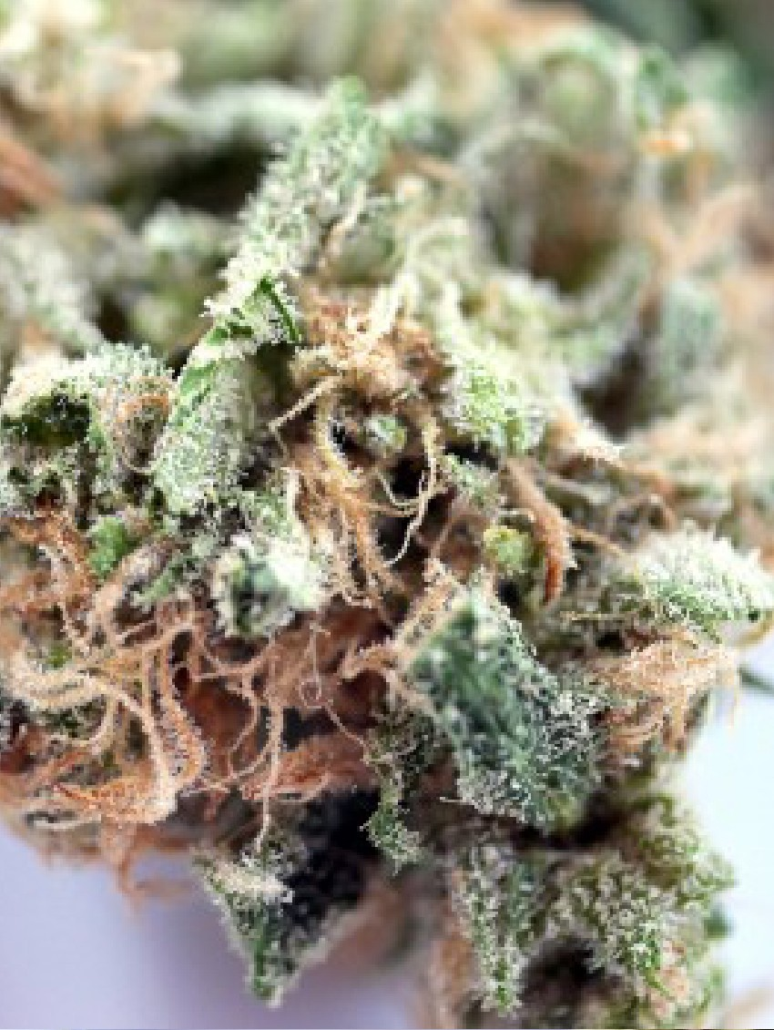 Lavender Kush